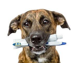 Pet Dentistry 3